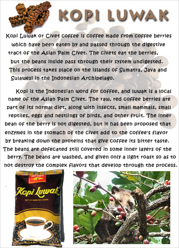 "Kopi Luwak,  Indonesia, World Famous Kopi Luwak Coffee ""Rich, strong, and complex aroma of Indonesian Arabica coffee"""